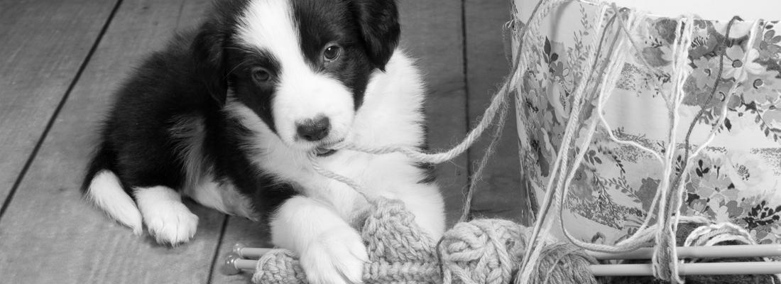 Hundewollspinnerei - Image 001
