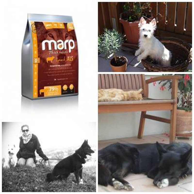 marp Futterbewertung Erfahrung Erfahrungsbericht Hundefutter gesund getreidefrei Pfotenoase