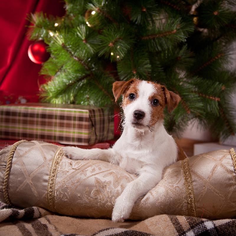weihnachtsgrüße_pfotenoase1